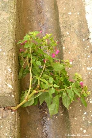 fleurs-beton-2