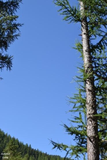 L arbre est il un humain comme un autre